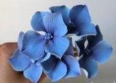 Fotopostupy na kvety