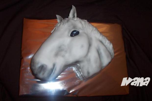 Fotopostup na koňa - foto postup